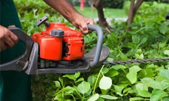 Shrub Removal in Bellevue WA Shrub Removal Services in Bellevue WA Shrub Care in Bellevue WA Landscaping in Bellevue WA