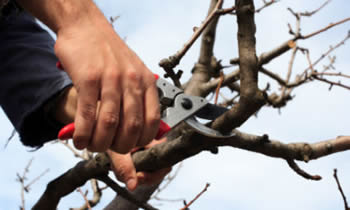 Tree Pruning in Bellevue WA Tree Pruning Services in Bellevue WA Quality Tree Pruning in Bellevue WA