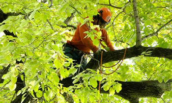 Tree Trimming in Bellevue WA Tree Trimming Services in Bellevue WA Tree Trimming Professionals in Bellevue WA Tree Services in Bellevue WA Tree Trimming Estimates in Bellevue WA Tree Trimming Quotes in Bellevue WA