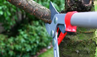 Tree Pruning Services in Bellevue WA